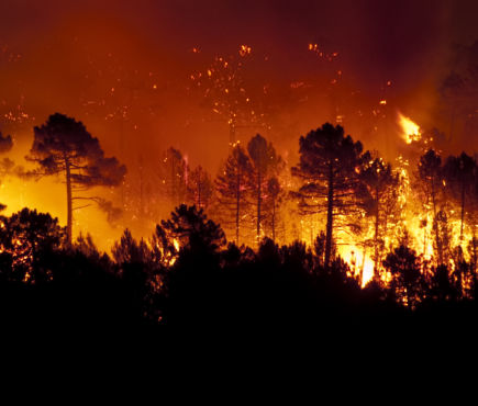 wildfire in a forest at night