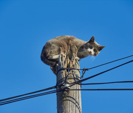 cat on top of power pole