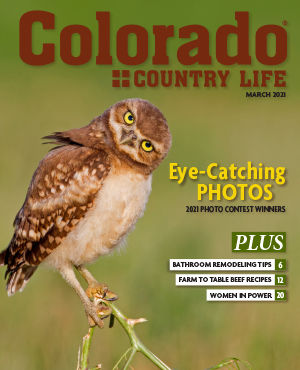An owl on the cover of the March 2021 Colorado Country Life magazine