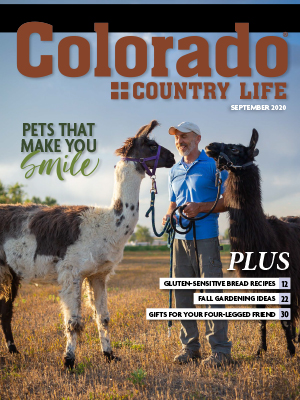 Man with llamas on the cover of Colorado Country Life magazine September 2020.