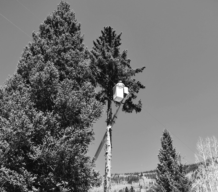 lineworker trimming trees near power lines